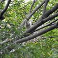 木の陰で尾羽広げて...