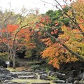 秋の万博公園