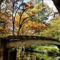 写真: 戦場ヶ原にかかる橋