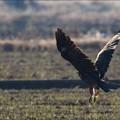 写真: 大きな翼