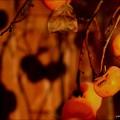 写真: 板塀に映る柿