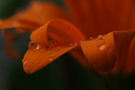 美しく雨に濡れて