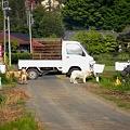 Photos: 軽トラのある風景 ~犬達も付き合い~