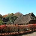 里の晩秋風景15