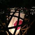 写真: 夏の記憶:奈良燈火絵05