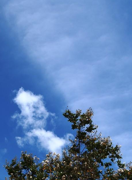 青空に映える:彩りライン10