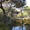 写真: アートな枝振り:銀閣寺05
