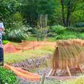 写真: 梅田スカイビル庭園