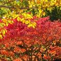 写真: 紅葉~新横浜