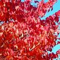 写真: 紅葉~鳥山川遊歩道