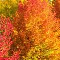 写真: 紅葉~富山空港
