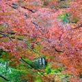 写真: 横浜大通り公園~紅葉