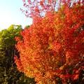 写真: 紅葉~六甲アイランド