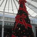写真: 広島駅前のツリー