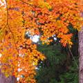 写真: 秋模様