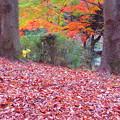 写真: 落ち葉も輝く