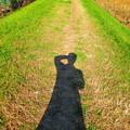 写真: あぜ道と影