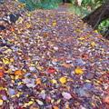 写真: 落ち葉遊歩道
