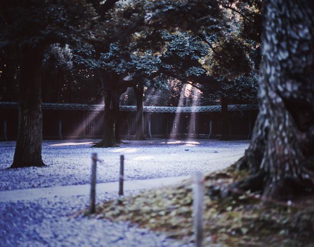 写真: 近寄りがたい木漏れ日
