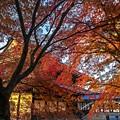 写真: 秋的饗宴