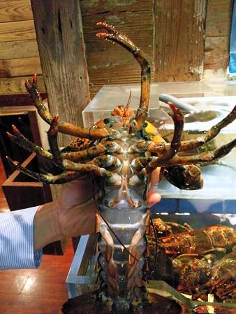 ロブスターのお腹@Red Lobster