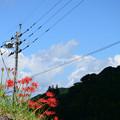 写真: 石垣の花