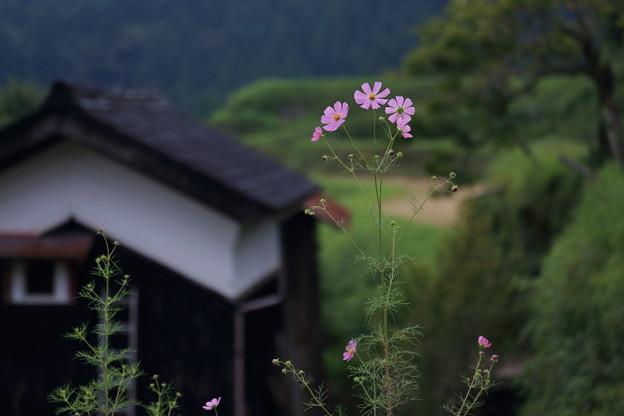 2019_09_20高島市畑5