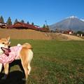 Photos: 再び富士山とメグ
