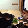 写真: 欲しがる犬