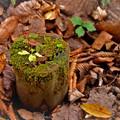 写真: 森のオブジェ