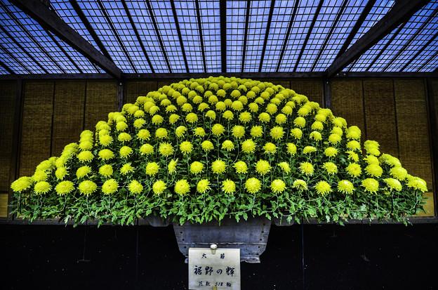 Photos: 大作り花壇