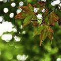 写真: 秋の訪れ