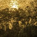 写真: 夕日浴びて