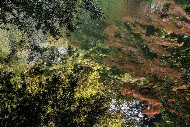 Photos: 水面の秋
