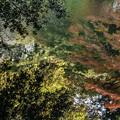 写真: 水面の秋