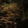 写真: ライトアップ「六義園」