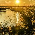 写真: 落日「与田浦」