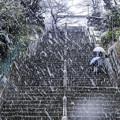 写真: 雪の本門寺 (4)