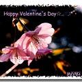 写真: バレンタイン3