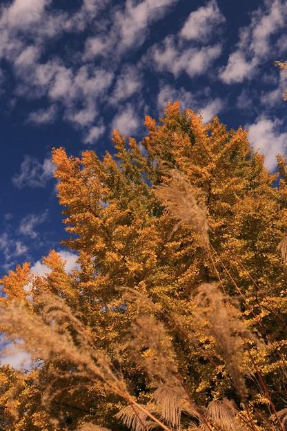 秋の空と山吹色