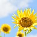 写真: 夏の幸福力!