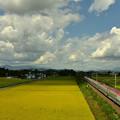 写真: 収穫期4