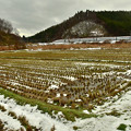春を待つ田んぼ