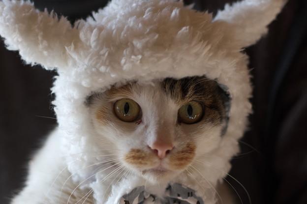 年賀状の猫(みや)