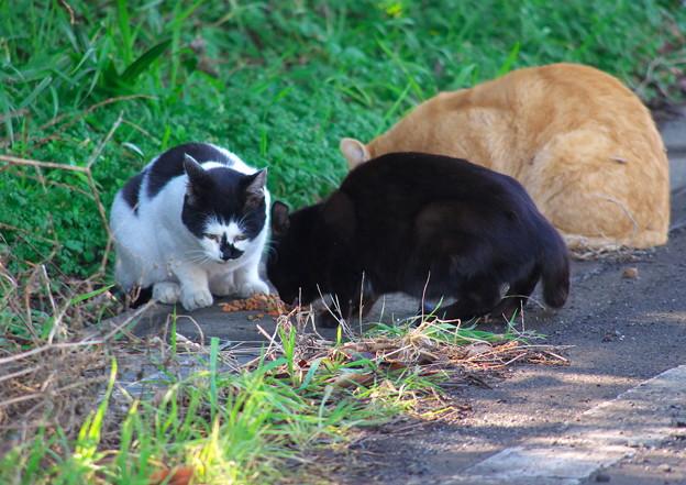 お屋敷の猫たちも元気です。