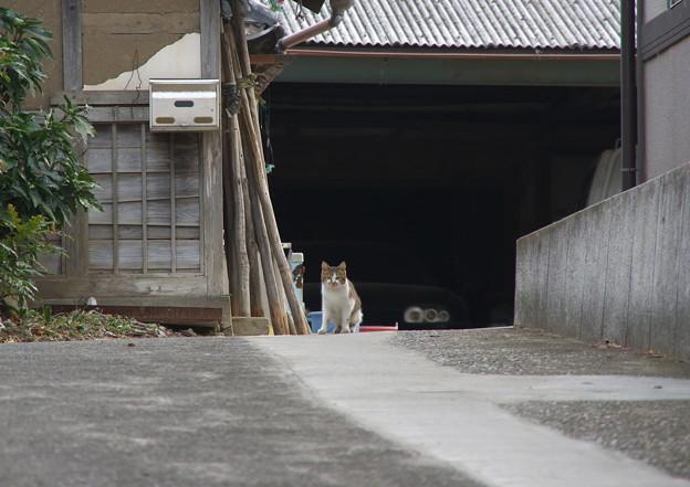 農家の猫さん