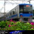写真: 四季の鉄道・秋