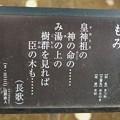 Photos: 樅(モミ)