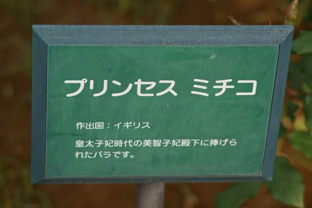 薔薇 プリンセス・ミチコ