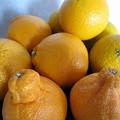 Photos: 柑橘類